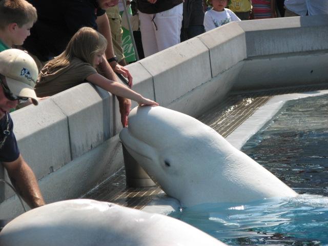 Grandkids Feeding & Petting Baluga Whale at Marineland