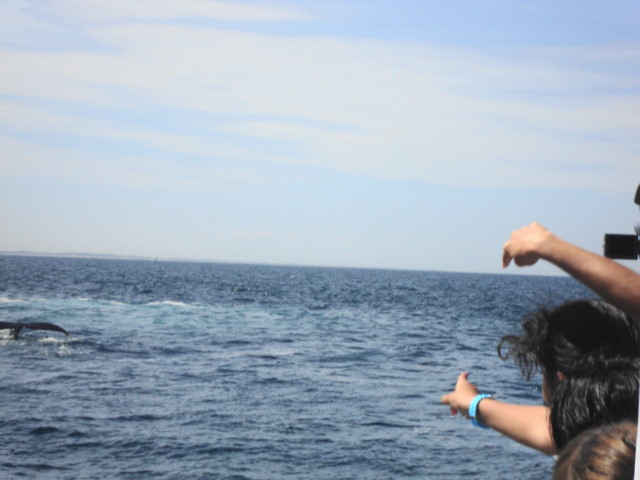 We saw 2 Humpback Whales!