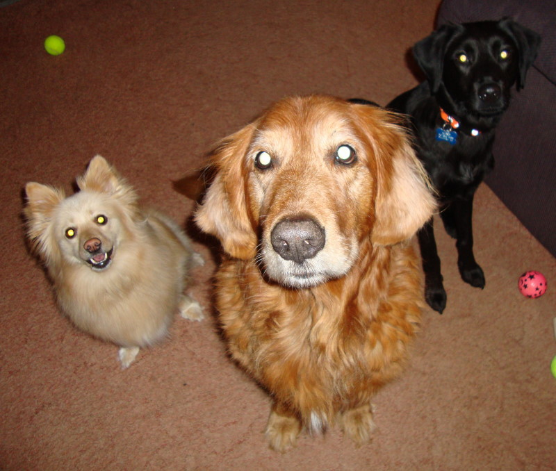 My two dogs Mango & Alfred - Daughter & Son In Laws Dog Hudson (black dog).