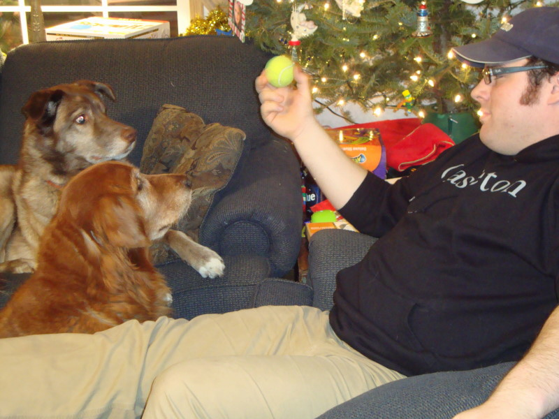 My son & daughter In Laws dog Parker, My Retriever Alfred with Son In Law Chris.